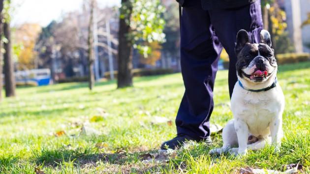 iStock_Dogwalker_030121